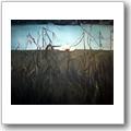 Gabriele von Glasow: Landschaft IV