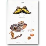 Merian 1985 – Schmetterlinge