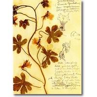 Luxemburg 2017 – Herbarium Postkartenset